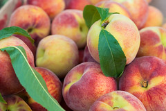 bigstock--peaches (mophilli) Tags: peach fruit peaches background market nectarine agriculture summer red yellow food large farm organic ripe orange healthy group texture juicy fresh close gourmet full fair natural eating nature produce health sweet freshness diet round raw many harvest agricultural abstract set frame closeup textured nutrition bunch peel lifestyle clean autumn velvet