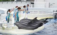 Homo sapiens and Tursiops truncatus --  Bottlenose Dolphins with trainers 4518 (2) (Tangled Bank) Tags: japan japanese asia asian kyoto city acquarium homo sapiens tursiops truncatus bottlenose dolphins with trainers 4523 2 aquarium