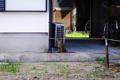 Today's Cat@2016-08-21 (masatsu) Tags: cat catspotting thebiggestgroupwithonlycats pentax mx1 osaka
