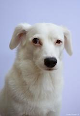 Portrait qui a du chien (Cathy'c) Tags: chien animaux animal domestique portrait nikon d7100 40mm nikkor
