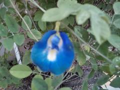 Anglų lietuvių žodynas. Žodis magnoliophyta reiškia <li>magnoliophyta</li> lietuviškai.
