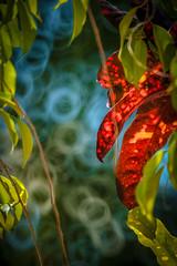 Bright Bokeh (--Welby--) Tags: bright bokeh doughnut colour vibrant leaves light samyang 300mm fuji xt10