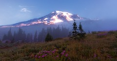 Good Morning, Mt Rainier! (Mt Rainier NP, WA) (Sveta Imnadze. (Will be away for a while. Have ver) Tags: nature landcape mountains pacificnorthwest mtrainier mtrainiernp paradise skylinetrail earlymorning fog wildflowers wa