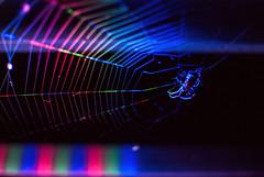 weaving rainbows (ewitsoe) Tags: spiders spider web weaving color light nikond80 35mm street insect arachnid ewitsoe poland polska europe summer spidey webs colr technicolor colorful evening horror mess afraid fear