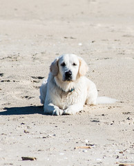eating without me? (RwA-) Tags: golden retriever sea poland olympus eps7 100300mm summer