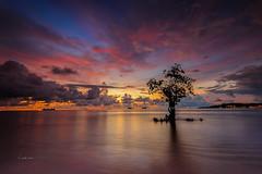 I'm Alone (zakies) Tags: indonesia padangindonesia lonely tree sunset slowshutter sunrise magnificent nikond700 no people single audion bukittinggiindonesia pacujawi