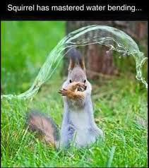 Magic of the Squirel (LoansByErick.com) Tags: funny pics animals fun facebook lol 2016 bunny squirel