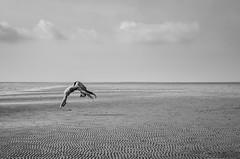 Tideland flic-flac // Wyk (//Sebastian) Tags: tide flicflac black white monotone minimal ebb lowtide wave clouds sky lines curves jump backflip salto lonely view horizon structure sand beach föhr foehr northsea germany schleswigholstein girl woman gymnast sea water middleofnowhere minimalistic