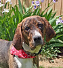 "Pet of the Week: Boomer • <a style=""font-size:0.8em;"" href=""http://www.flickr.com/photos/42888877@N06/8601862633/"" target=""_blank"">View on Flickr</a>"