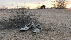 shoes in the sunset (2) (ron.photographer) Tags: trash desert dump crap mojave mojavedesert californiacity calcity deserttrash desertgarbage stuffinthedesert