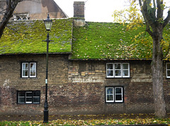 The Moss Covered Roof (Louise and Colin) Tags: street old city uk autumn windows roof england green english heritage history moss britain streetlamp eu explore ely british cambridgeshire cottages cathedralcity thefens flickrexplore explored autumn2012