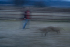 tiffanie Carter Art 260-2 Time (byuiphotography) Tags: dog night landscape blured art2602 tiffaniecarter