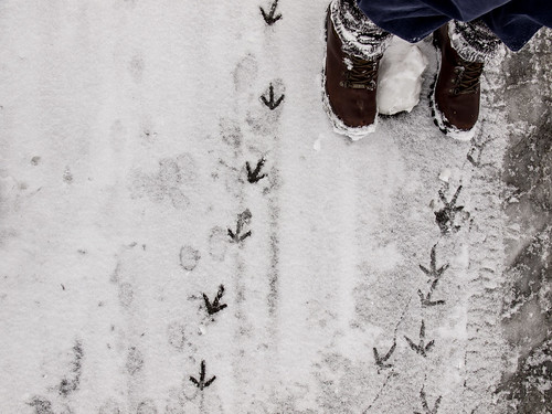 road snow boots footsteps flintshire northwales