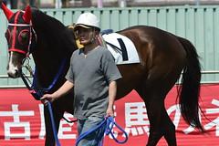 20130405-_DSC5196 (Fomal Haut) Tags: horse japan nikon nagoya 80400mm d4   14teleconverter  d800e