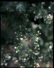 LF.160VC.201304.01 (zampras) Tags: film kodak 4x5 sheet 160vc portra aeroektar