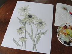 Adding a quick watercolor wash to an ink drawing (mbrichmond) Tags: inkdrawings blackeyedsusans naturedrawings drawingflowers