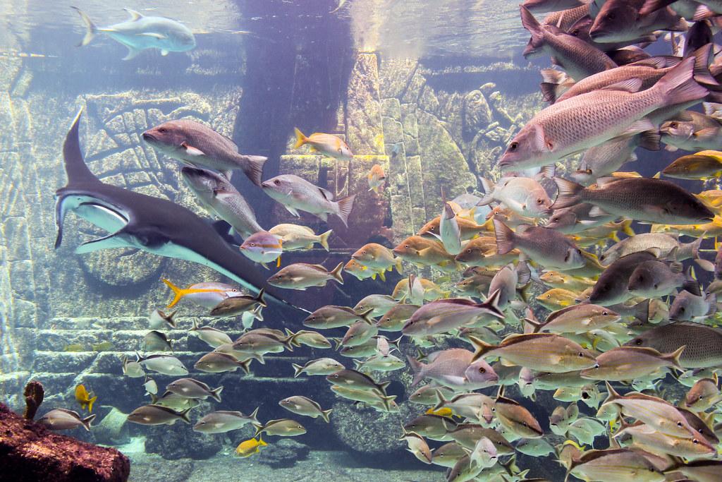 Poissons à l'Atlantis - Paradise Island