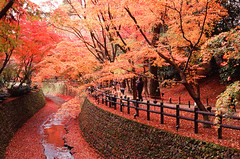 Orange canal (Wunkai) Tags: autumn red fall fence river geotagged canal maple kyoto vessel slidefilm     carlzeiss contaxg1 fujirvp100  geo:tool=yuancc kitanotenmang   geo:lat=35031239 geo:lon=135734314