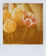 Morning glory (Joep Polaroid Photography) Tags: film polaroid spring 600 instant expired slr680 intergral joeppolaroidphotography