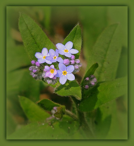 forget-me-not, please!
