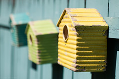 the bird houses (Kilkennycat) Tags: summer house color green bird yellow canon fence spring turquoise birdhouse 50mm14 500d kilkennycat t1i ryanconners