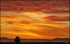 SLEEPLESS (mutter2009 *OFF*) Tags: sunset orange ngc archive coth nikond60 bej anawesomeshot coth5