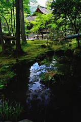 The season of fresh green, Kyoto Sanzen-in (yinlei) Tags: spring kyoto   sanzenin