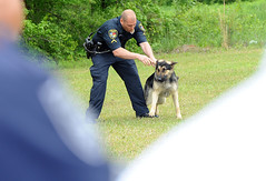 DogSchool5 (prophoto2008) Tags: usa dog training nc police northcarolina wilson wilsoncounty k9
