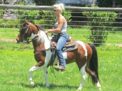Fancy Spotted Racking Trail Mare