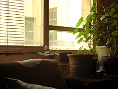 (pooyashahsiah) Tags: home window africanviolet