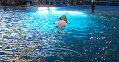 Unna6 (GypsySkye7) Tags: sanantonio believe orca seaworld shamu killerwhale unna captivity shamurocks