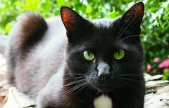 New Prince in town (G_E_R_D) Tags: black cat prince katze schwarz kater