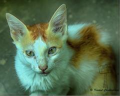 CAT (kushal_chakraborty@ymail.com) Tags: kushalchakraborty photography professional landscape portrait dslr longexposure hdr kolkata india