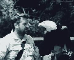 Pairi Daiza (Natali Antonovich) Tags: pairidaiza zoo belgium belgique belgie bird park portrait eagle stare profile monochrome lifestyle tradition