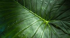 Palm (Waldemar Wiera) Tags: palme palm palma pflanze vegetable lisc