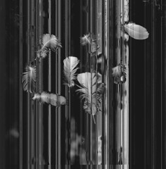 glitch itch (steve-jack) Tags: hasselblad 501cm 80mm ilford delta 100 120 medium format film 6x6