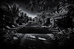 the garden eden (sonofphotography) Tags: thegardeneden beautiful garden relax peace harmony clouds heaven streetphotography bw blackwhite tsphotoart blackandwhite beautyphotoart street portrait landscape availablelight sun shade sky streetart amazing world leicam