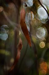 Autumn time 0.1 (bresciano.carla) Tags: naturalmente pentaxart pentaxk500 trioplan00mm vintage manuallens bokeh light bubbles