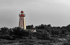 point de repre pour marin - for marine landmark (serial n N6MAA10816) Tags: desaturation arbre tree rouge red extrieur