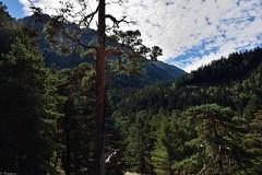 Forêt pyrénéenne (Mystycat =^..^=) Tags: hautespyrénées france midipyrénées parcnationaldespyrénées pins arbres forêt nuages ciel cauterets grandsitemidipyrénées