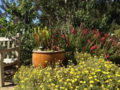 At the UC Botanical Garden (Melinda Stuart) Tags: ucbg botanicalgarden ucb berkeley flowers garden carnivorous yellow red bench seat