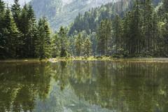 Gosauer Lacke Reflections (Patrick Vierthaler) Tags: reflections reflektionen symmetric trees bume symmetrische water wasser gosauer lacke gosau gosausee dachstein gebirge dachsteingebirge summer sommer austria sterreich             landscape