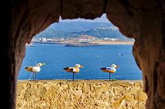 221 - Farolim da Nazar (paspog) Tags: nazar portugal mouette mouettes seagul seaguls