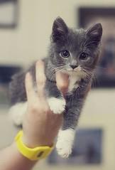 So Cute Kitten! via http://ift.tt/29KELz0 (dozhub) Tags: cat kitty kitten cute funny aww adorable cats