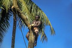 The Feller of Trees - 2,  Cochin, Kerala (Anoop Negi) Tags: india kerala cochin ernakulam ezhava wood cutter toddy tapper portrait working thevera thavera man tree axe photo photography anoop negi ezee123