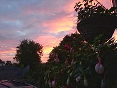 Sunrise this morning. (Sharon B Mott) Tags: sunrise sky dawn morning nature september sonyxperiaz5 fuchsias