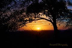 Sunrise with Tree (AncasterZ) Tags: sunrise sunset tree laea1 sal1650