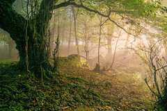 Enchanted (jactoll) Tags: broadway worcestershire cotswolds light mist misty fog foggy magical mood trees landscape sony a6000 zeiss 1670mmf4 jactoll