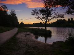 Virginia Water (martin_rees) Tags: virginiawater england uk surrey lake sunset windsorgreatpark tree silhouette reflections landscape nik colorefexpro4 afterglow