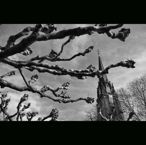 Church of the Gnarly Branches